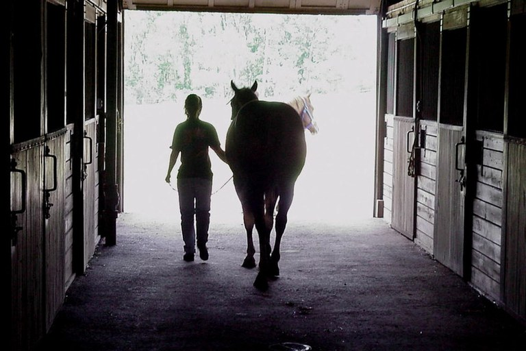 Student walking a horse out of the Penn State Horse barns