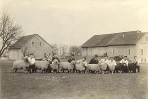 A group of sheep, ready for exhibition, photographed in front of the Old East Barns around 1930.