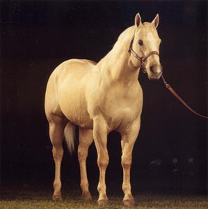 Skip Sioux propelled Penn State to world class status as a breeder of American Quarter Horses.