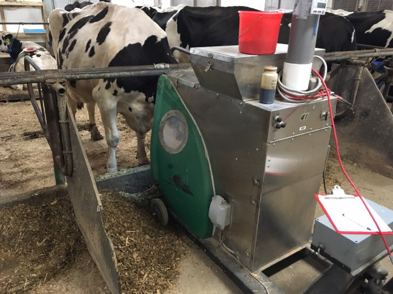 Cows in the study at the Penn State dairy barns, to eat a sweet treat, put their heads in devices that measure methane they belch. The average dairy cow burps about 380 pounds of the potent greenhouse gas a year.