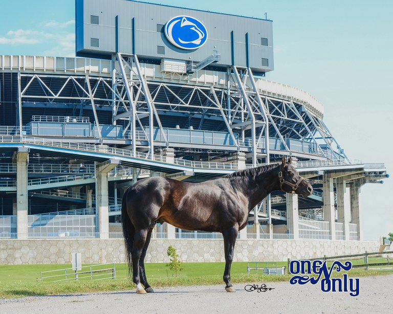 The outstanding Quarter Horse stallion, One N Only (Uno), has been donated to Penn State University by Anthony and Christina Curiale, Hidden Lake Farm, New Jersey.  Photo courtesy of Ashleigh Egan, AE Photography