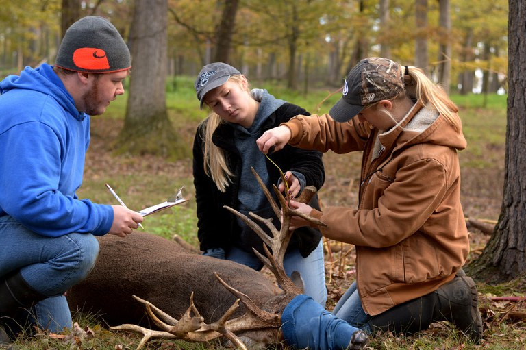 General health care is a big part of the students' work at the Penn State Deer Research Center. Here, Joey Dell, Kayla Schlichting and Maddy Schneider take antler measurements on a sedated buck during fall vaccinations. Penn State Image