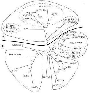 DRPhylogeny
